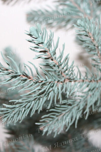 Голуба лита ялинка голки