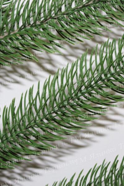 Світло зелена лита сосна голки