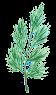 хвоя на елку иконка